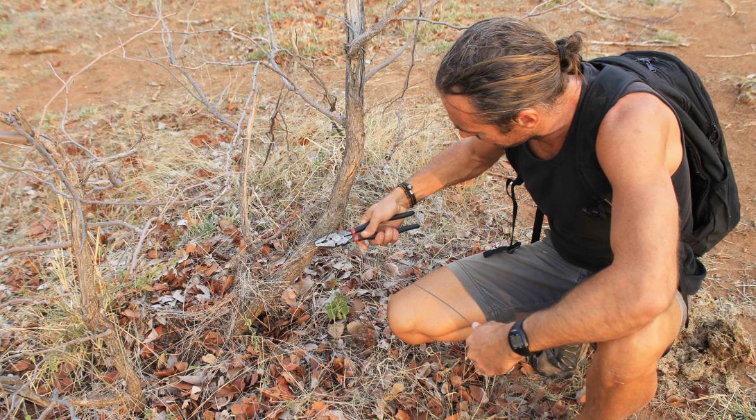 Un voluntario ayuda a retirar trampas para animales salvajes durante su programa de conservación en Botsuana.